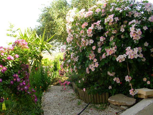 tous ces rosiers que l'on aime - floraisons Dscn2111