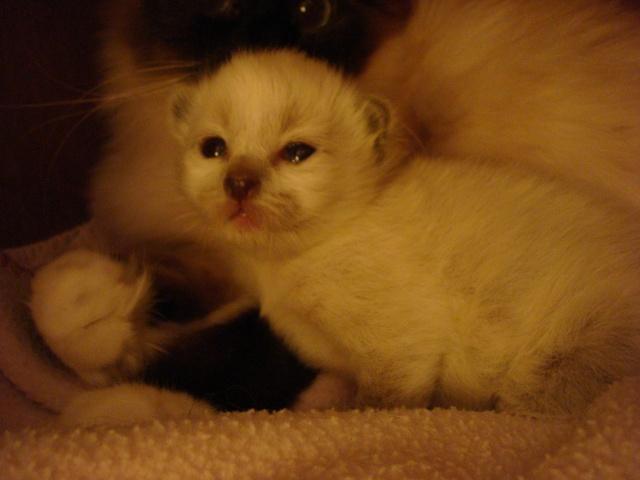 Le chaton unique de Geisha et Gulli est né ! - Page 2 Dsc04517