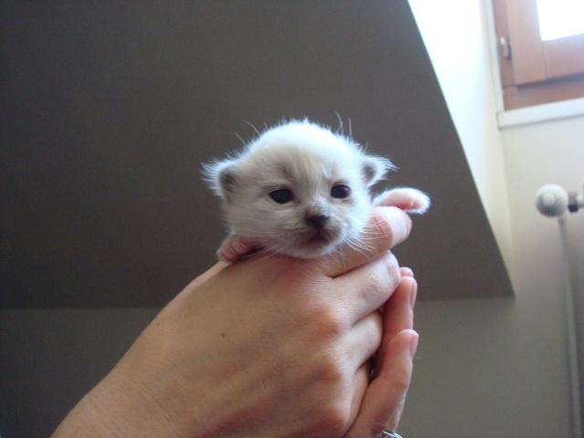 Le chaton unique de Geisha et Gulli est né ! - Page 2 Dsc04519