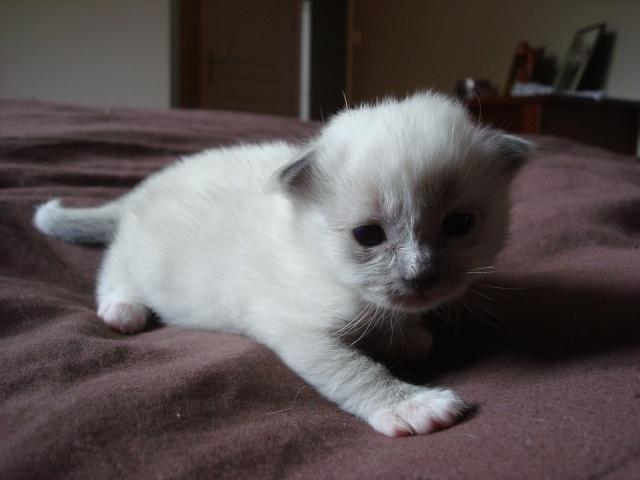 Le chaton unique de Geisha et Gulli est né ! - Page 2 Dsc04521