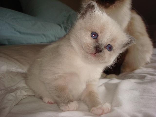 Le chaton unique de Geisha et Gulli est né ! - Page 2 Dsc04611