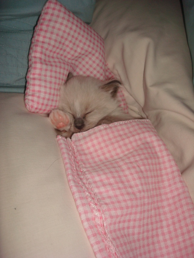 Le chaton unique de Geisha et Gulli est né ! - Page 2 Dsc04614