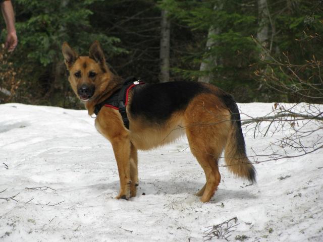 Multi-harnais Animalin: taille et réglage? Img_2913