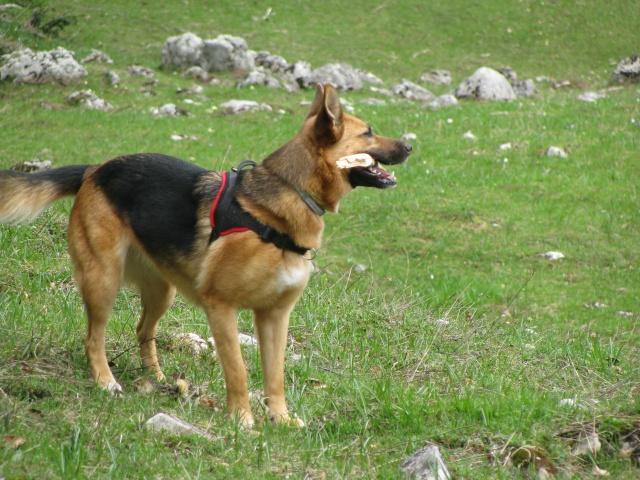 Multi-harnais Animalin: taille et réglage? Img_2915