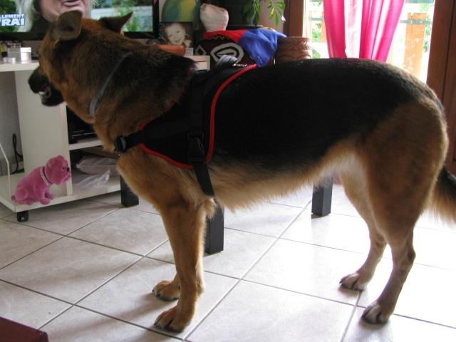 Multi-harnais Animalin: taille et réglage? Img_3014