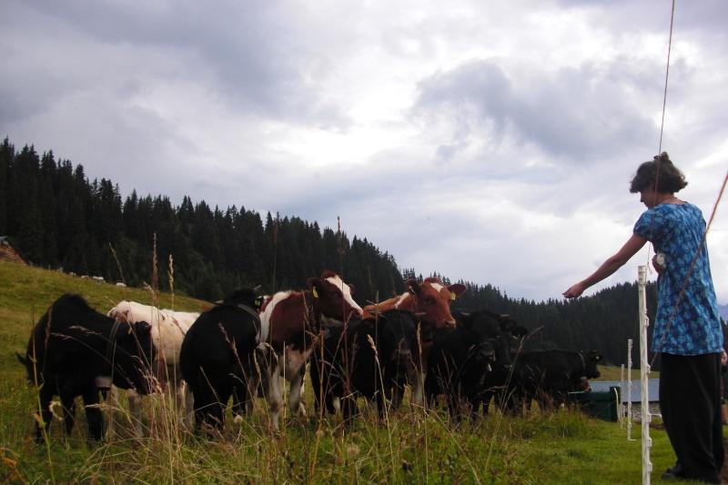 Saurer Suisse... Photo_38