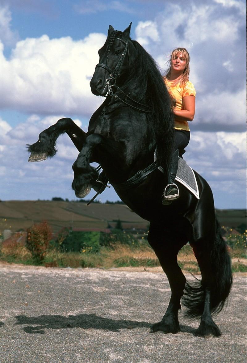 Une photo de vous et votre cheval - Page 5 Alwin_10
