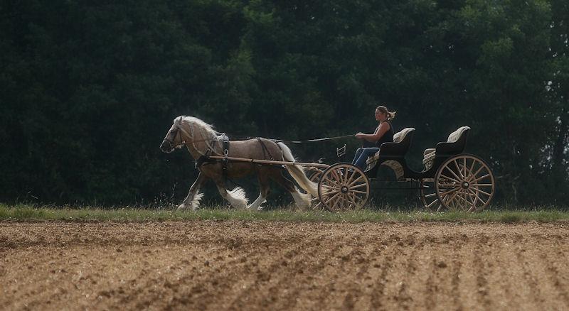 Une photo de vous et votre cheval - Page 5 Goldwy11