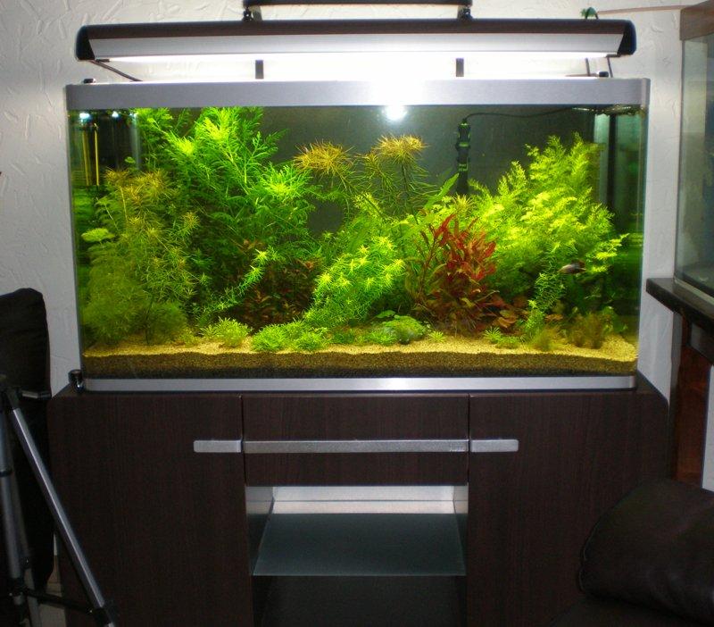 Projet d'un aquarium Amazonien Osaka_10