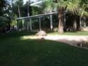 Quelques photos des tortues du zoo de la palmyre. Photo017