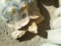 Quelques photos des tortues du zoo de la palmyre. Photo020