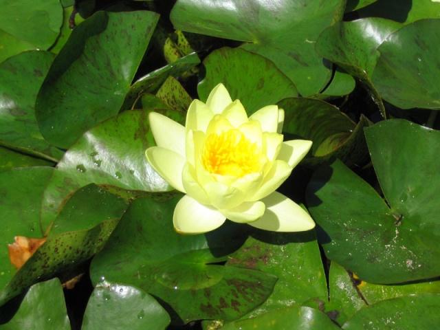 L'impermanence dans nos vies - Page 3 Lotus113