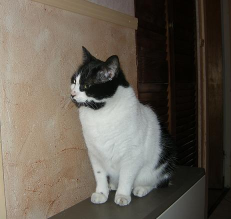 Mélynda, 1.5an noire et blanche, taillader au rasoir - Page 3 Dscn2312