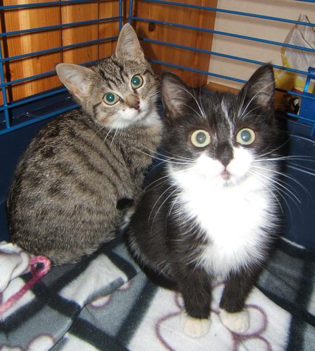 Maya et Sury, 2 fifilles nées le 7 septembre 2009 (4 mois) Sury_e10
