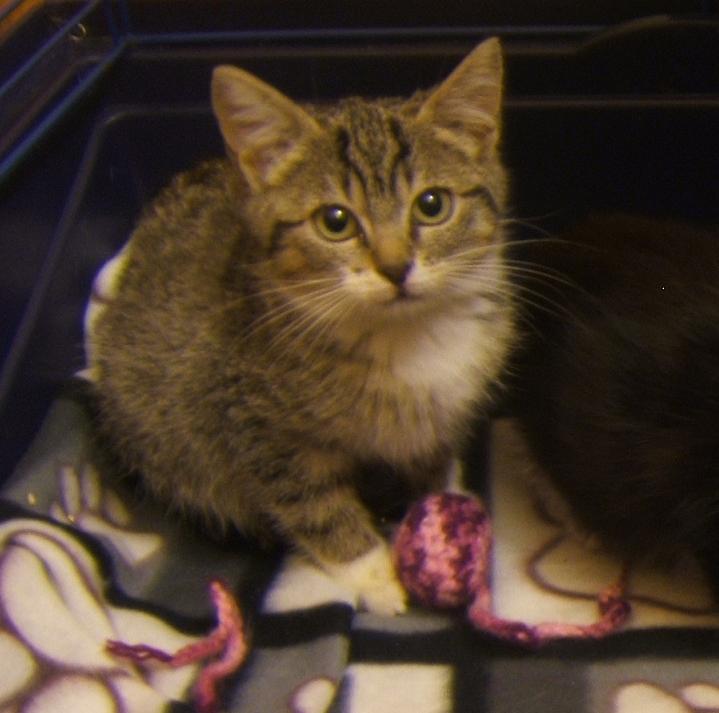 Maya et Sury, 2 fifilles nées le 7 septembre 2009 (4 mois) Sury_e11