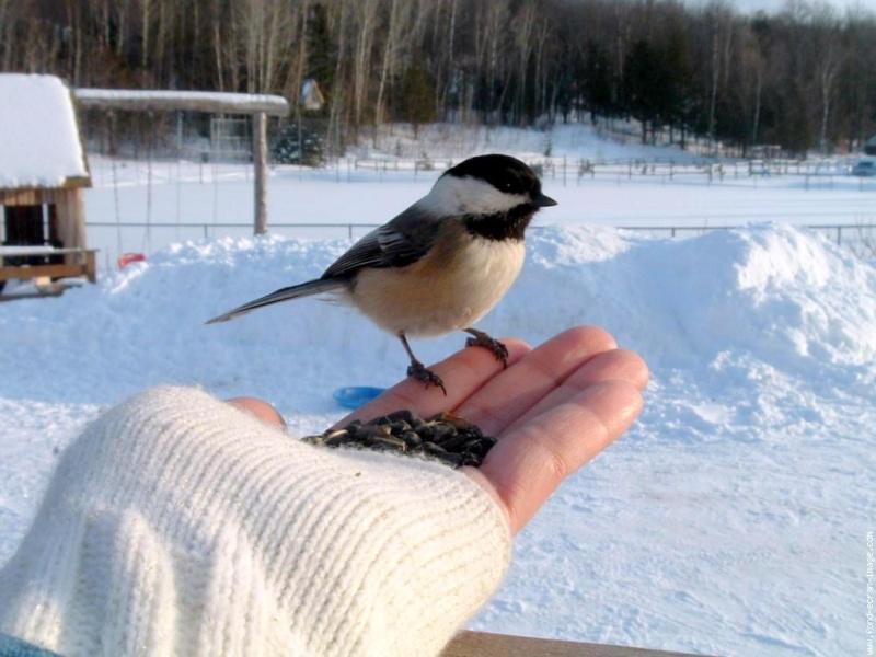Les oiseaux en fond d'écran et la vidéo de Jean Pierre GARINO Galeri10