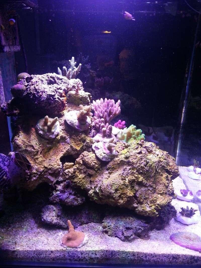 Le nouveau Blau Open Reef de Project901  20130511