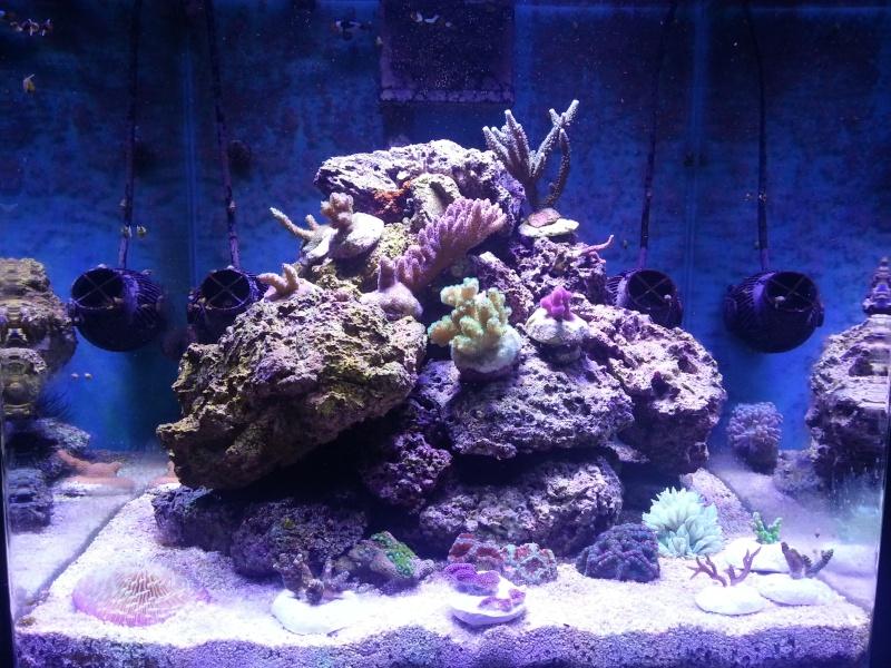 Le nouveau Blau Open Reef de Project901  20130513