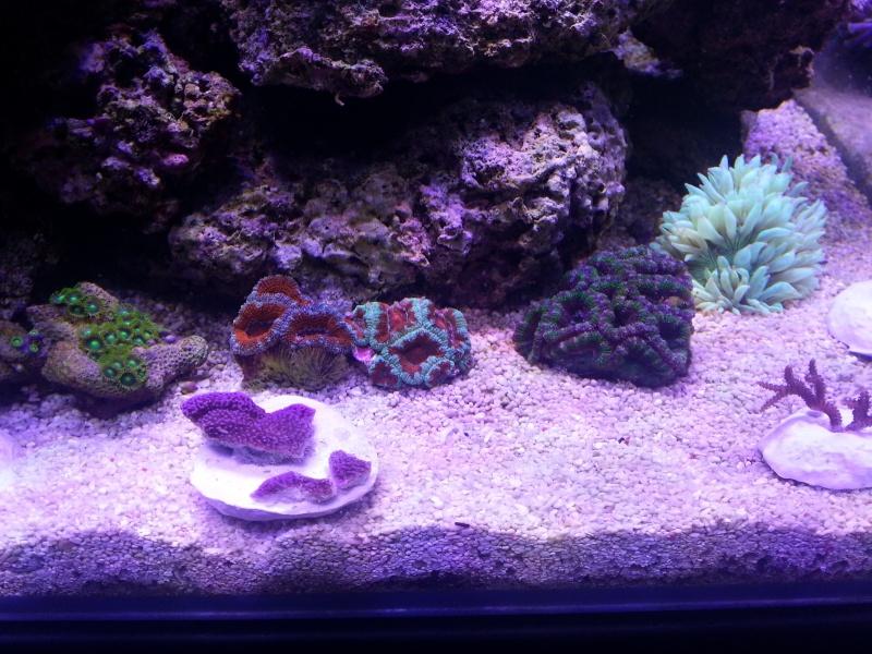 Le nouveau Blau Open Reef de Project901  20130514