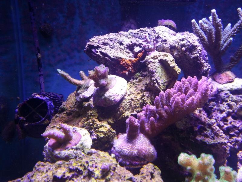 Le nouveau Blau Open Reef de Project901  20130516