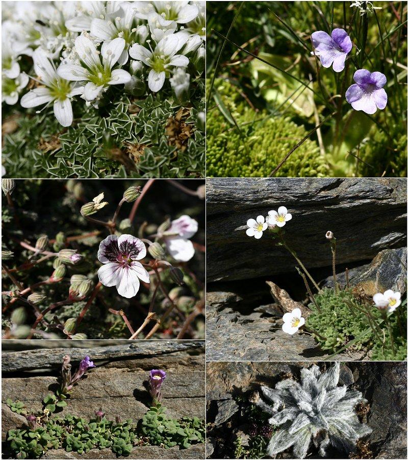 Découverte de la Sierra Nevada Flores10