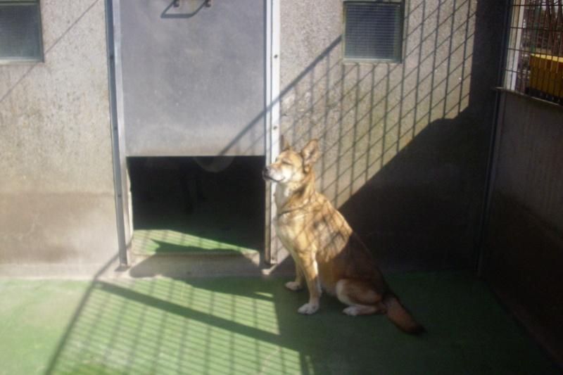 Croisée Husky de 12 ans - retour - pb d'arthrose 07710
