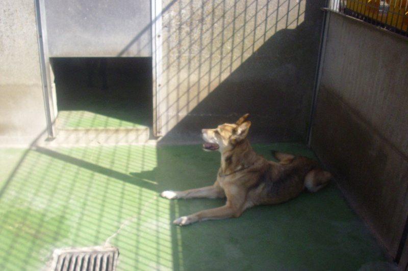 Croisée Husky de 12 ans - retour - pb d'arthrose 08110