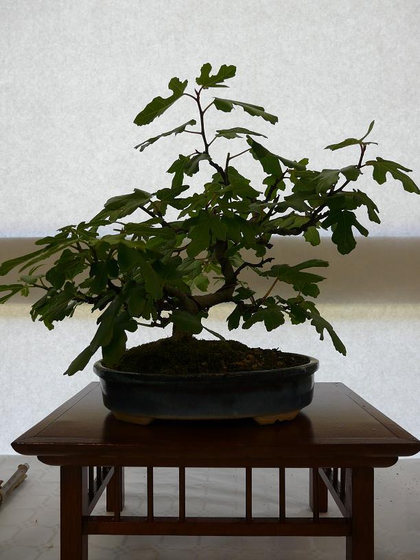 expos bonsai club marseille P1070101