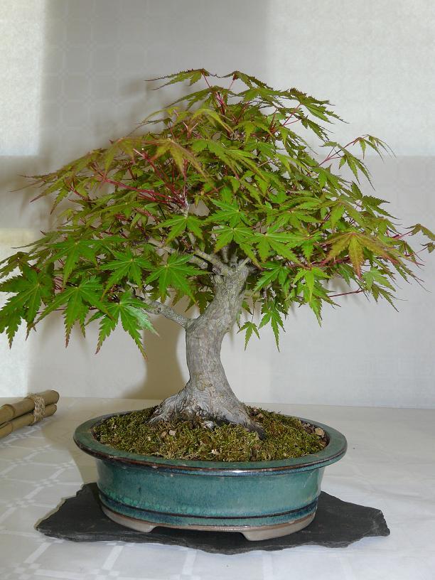 expos bonsai club marseille P1070102