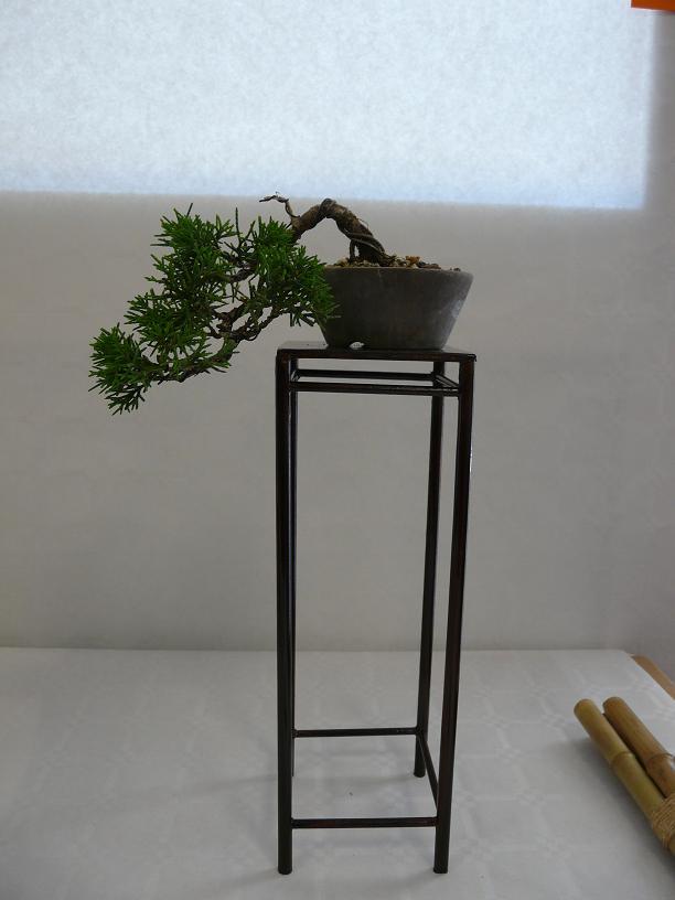 expos bonsai club marseille P1070103