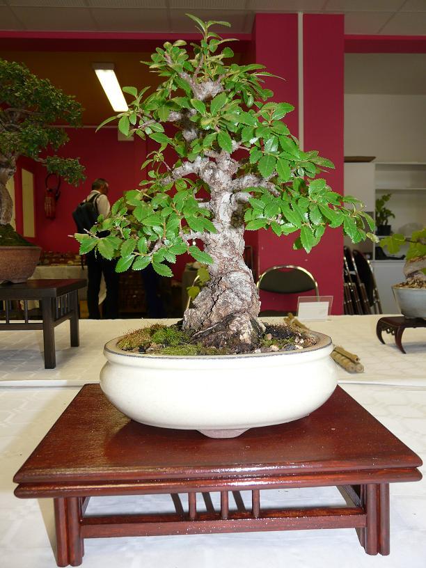 expos bonsai club marseille P1070105
