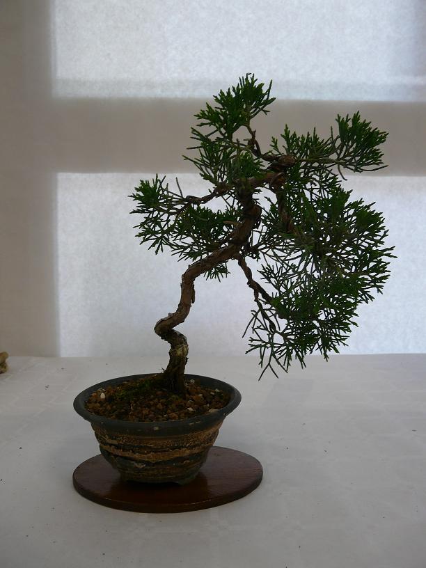 expos bonsai club marseille P1070380