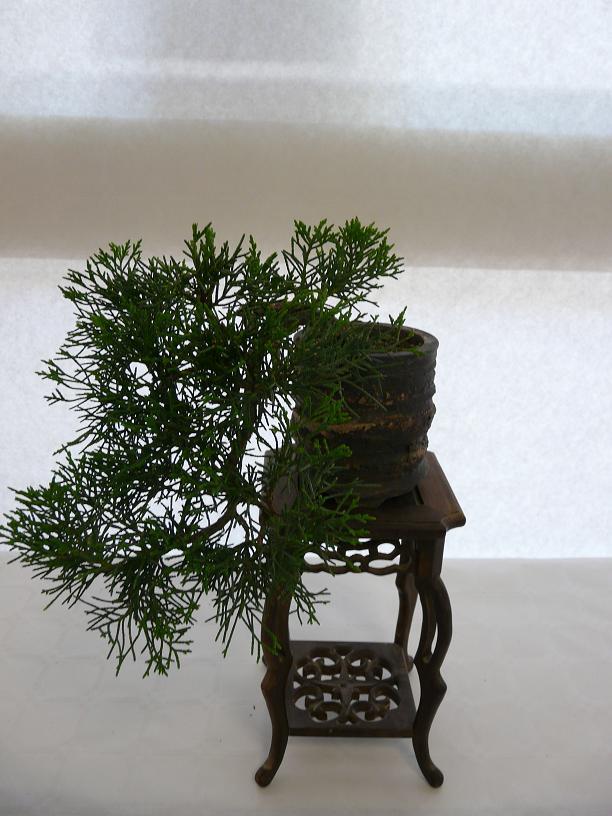 expos bonsai club marseille P1070381