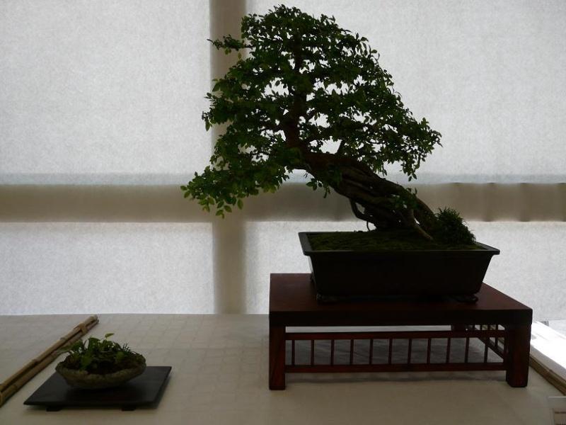 expos bonsai club marseille P1070382