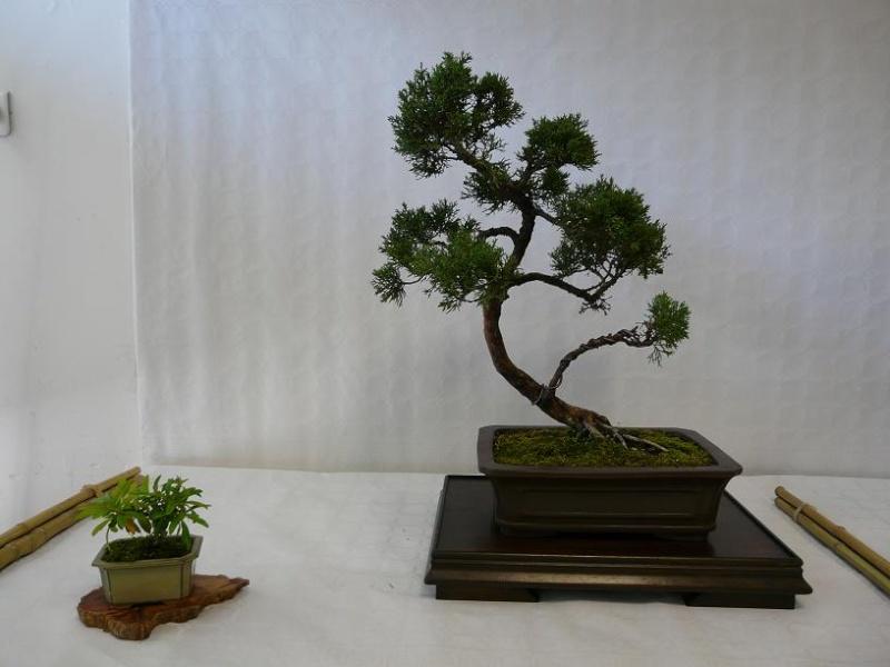 expos bonsai club marseille P1070383