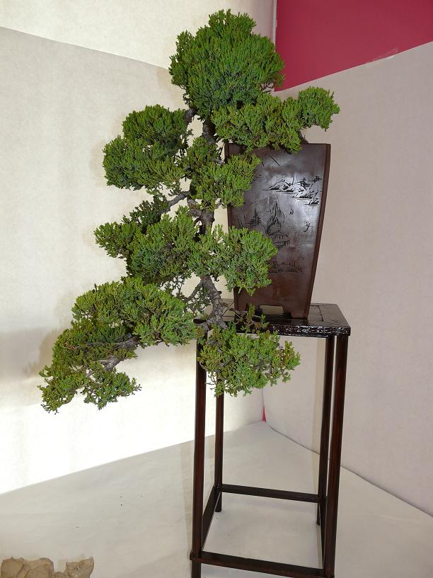 expos bonsai club marseille P1070387