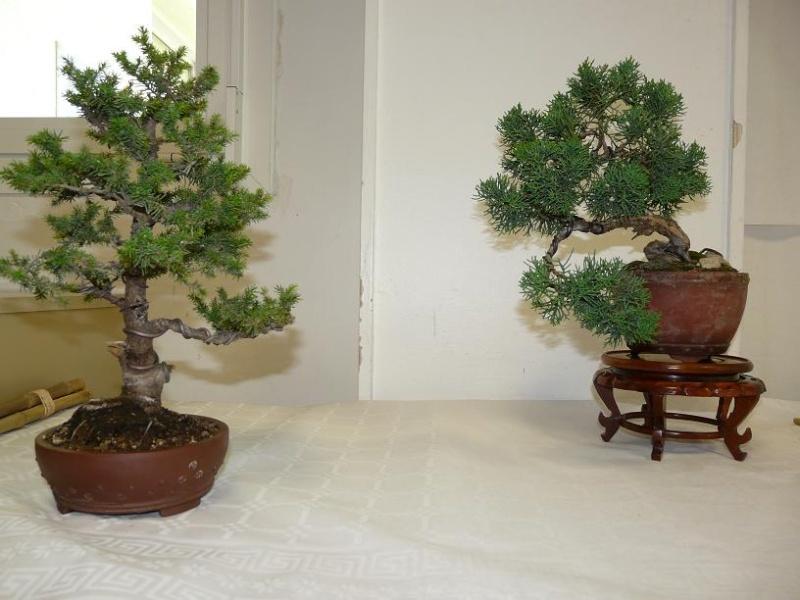expos bonsai club marseille P1070390