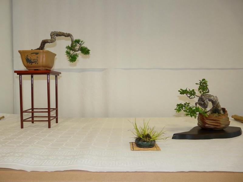 expos bonsai club marseille P1070391