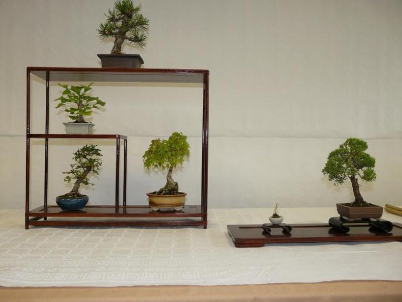 expos bonsai club marseille P1070392