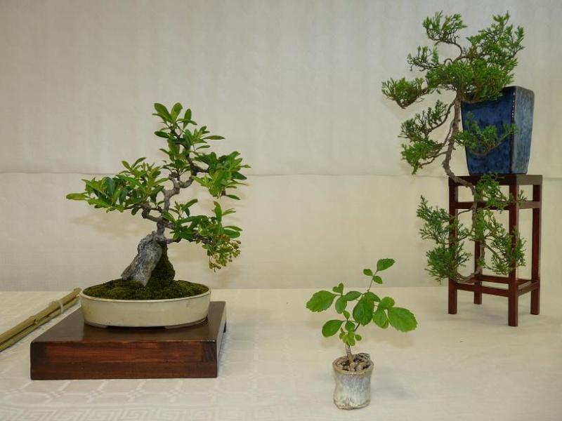 expos bonsai club marseille P1070393