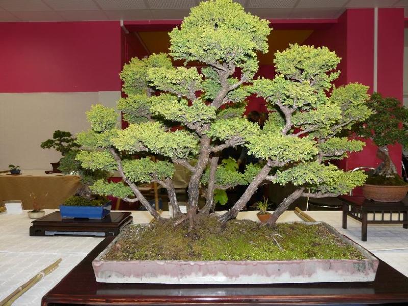 expos bonsai club marseille P1070411