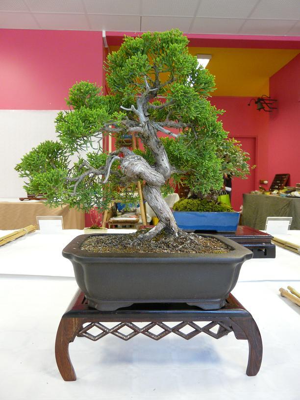 expos bonsai club marseille P1070412