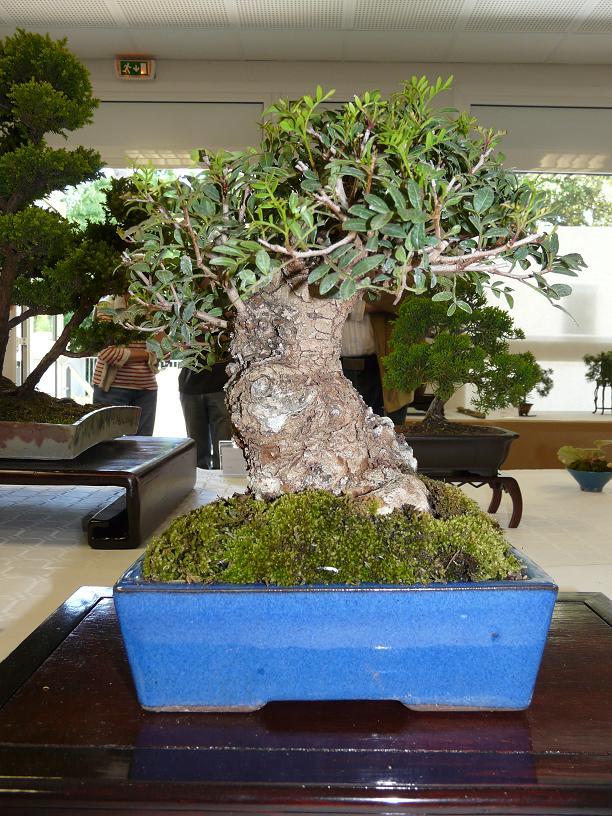 expos bonsai club marseille P1070415