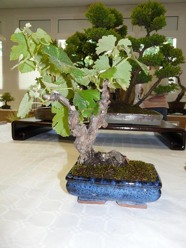 expos bonsai club marseille P1070416