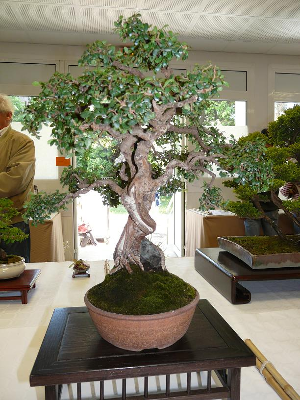 expos bonsai club marseille P1070417
