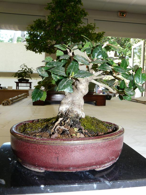 expos bonsai club marseille P1070418