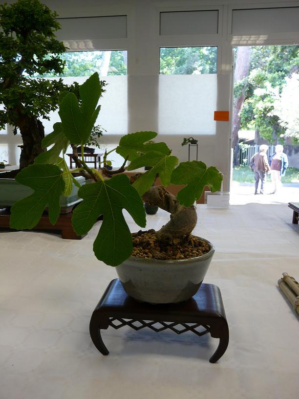 expos bonsai club marseille P1070419