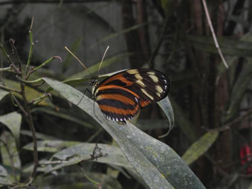 Naturospace Papora10