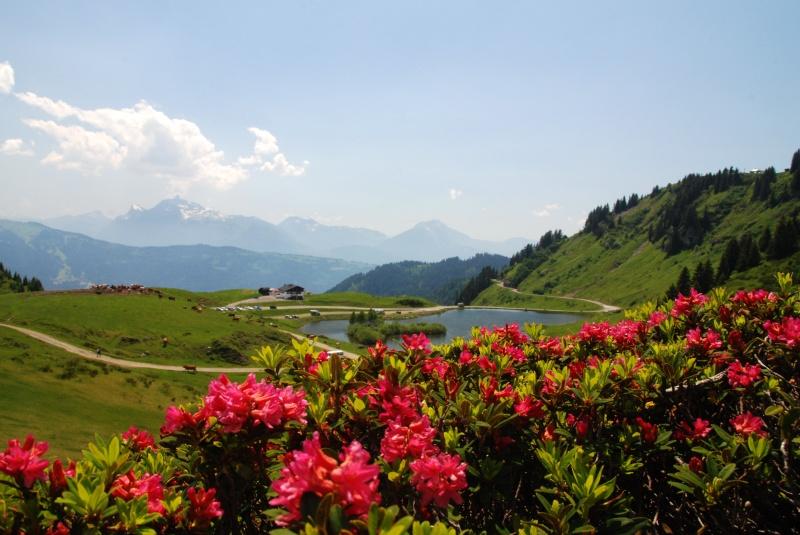 La Route des Grandes Alpes 11657710