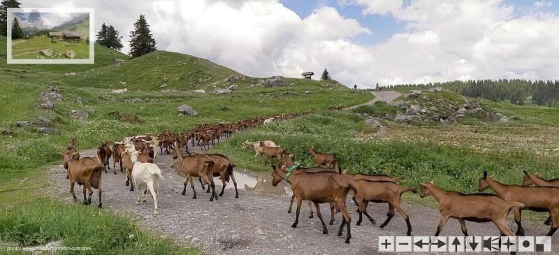 La Route des Grandes Alpes - Page 4 Sans_280